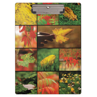 Autumn leaves mix clipboards