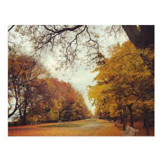Autumn Leaves NYC Riverside Park New York Fall Postcard