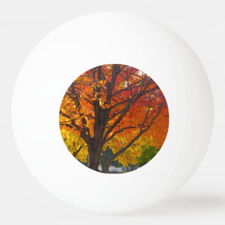 Autumn Leaves of Yellow and Orange Ping Pong Ball