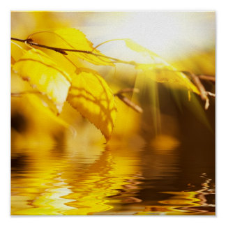Autumn leaves on a sunny day poster