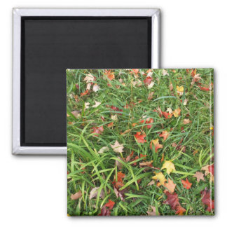 Autumn Leaves on Grass Magnet