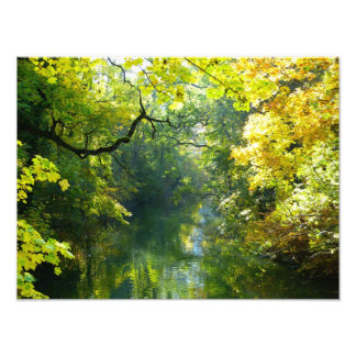 Autumn leaves over a stream photo print