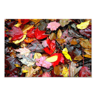 Autumn Leaves Print Photo Art