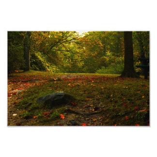 Autumn leaves Pucker street Dam Niles Michigan Photo Print