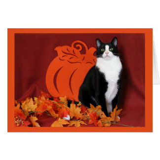Autumn Leaves, Pumpkin, and Tuxedo Cat Card