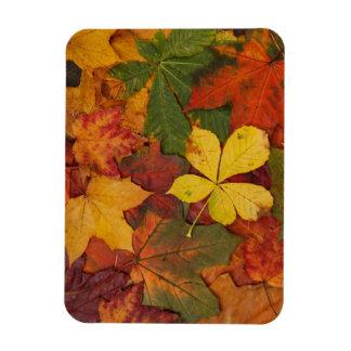 Autumn Leaves Rectangular Photo Magnet