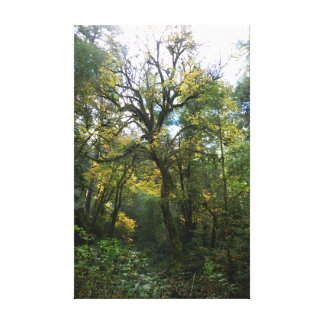 Autumn Leaves Tree Canvas Print
