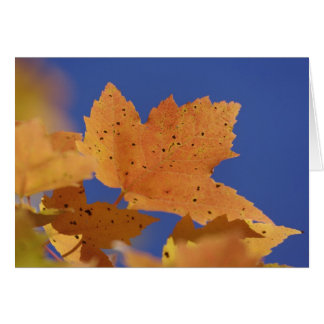 Autumn maple leaf and blue sky, White Greeting Card