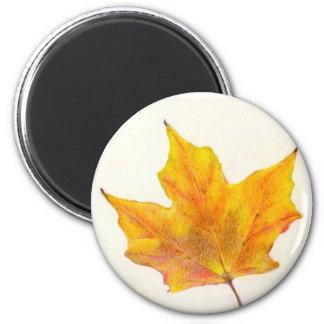 Autumn Maple Leaf in Shades of Gold Fridge Magnet