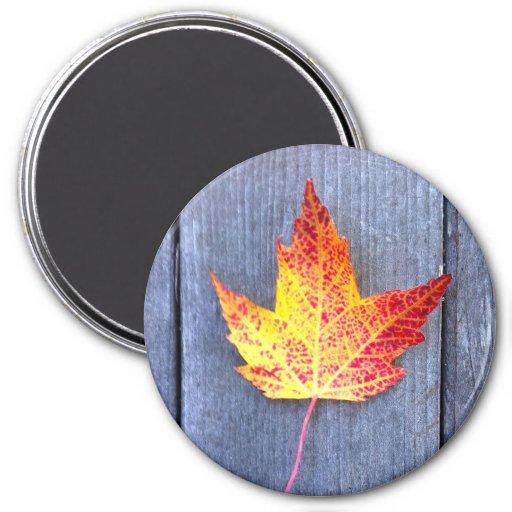Autumn Maple Leaf Refrigerator Magnet