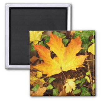 Autumn Maple Leaf Magnet