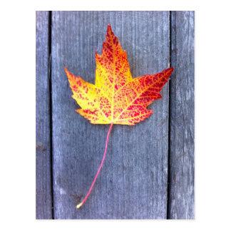 Autumn Maple Leaf Postcard