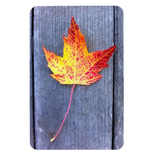 Autumn Maple Leaf Rectangle Magnets
