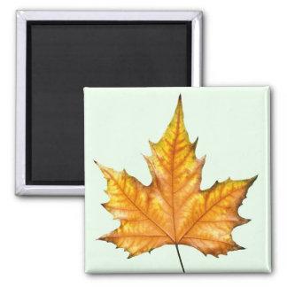 Autumn maple leaf square magnet