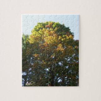 Autumn Maple Tree Jigsaw Puzzle
