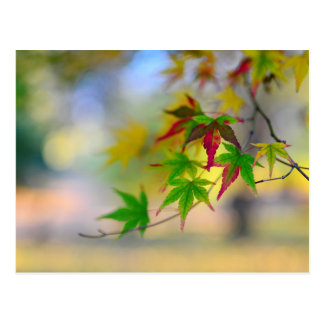 autumn maple tree leaf nature abstract detail back postcard