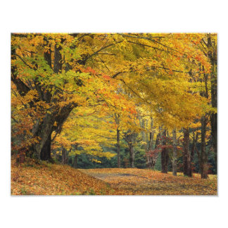 Autumn maple tree overhanging country lane, photo