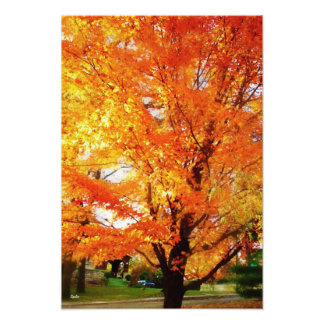 Autumn Maple Tree Photo Print Poster