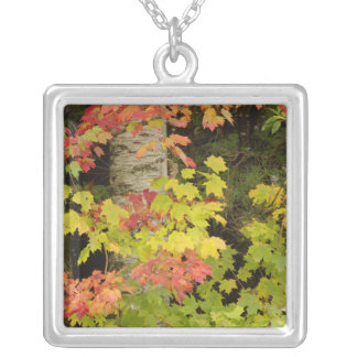 Autumn maple trees and birch tree, White Square Pendant Necklace