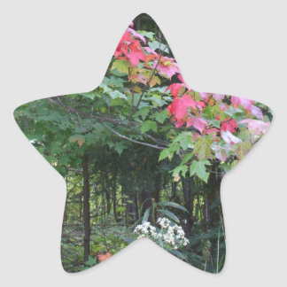 Autumn Maple Trees and White Flowers Star Sticker