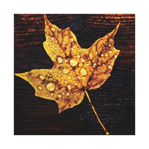autumn maple yellow leaf with raindrops stretched canvas prints