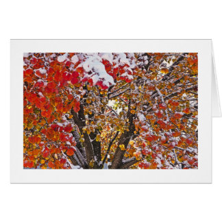 AUTUMN MEETS WINTER /BRIGHT RED LEAVES WITH SNOW CARD