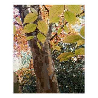 Autumn Moment Floral Poster