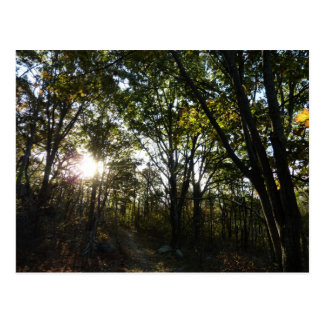 Autumn Morning at Shenandoah National Park Postcard