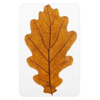 Autumn oak leaf rectangular photo magnet