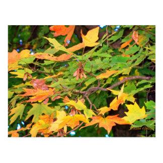 Autumn Oak Leaves Thanksgiving Postcard