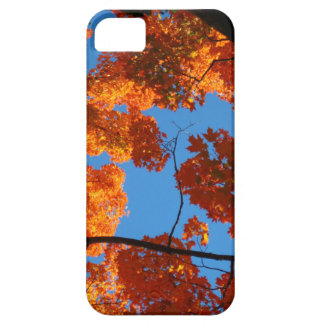Autumn orange Maple tree and blue sky iphone case