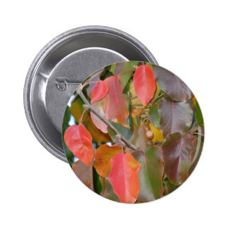 Autumn Ornamental Pear Leaves Pinback Buttons