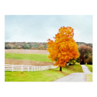 Autumn Pasture Postcard