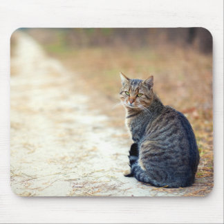 Autumn Path Tabby Mouse Pad