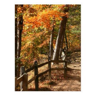 Autumn pathway postcard
