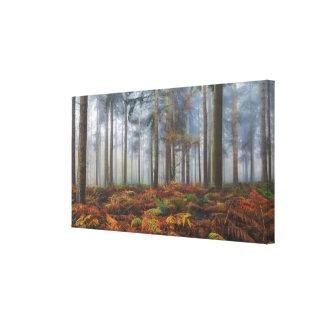 Autumn Pine Woodlands Canvas Print