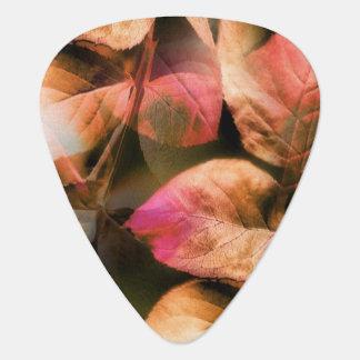 Autumn Plectrum