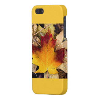 autumn presence case for iPhone 5/5S
