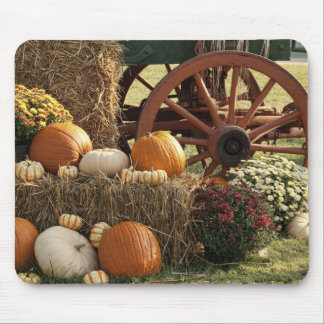 Autumn Pumpkins And Mum Display Mouse Pad