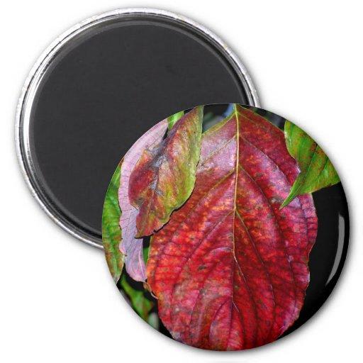 Autumn Red Dogwood Leaf Refrigerator Magnets