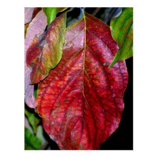 Autumn Red Dogwood Leaf Postcard