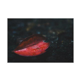 Autumn Red Leaf Stretched Canvas Print
