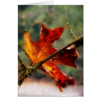 Autumn Red Leaf Nature Photo Card