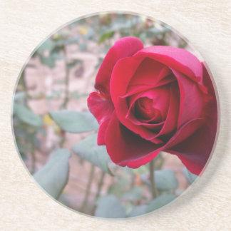Autumn red rose coaster