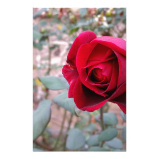 Autumn red rose customised stationery