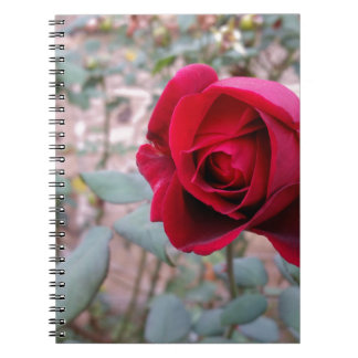 Autumn red rose notebooks