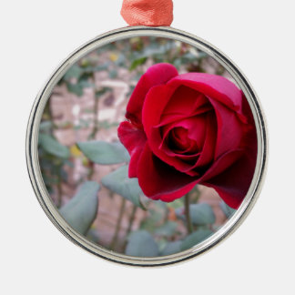 Autumn red rose Silver-Colored round decoration
