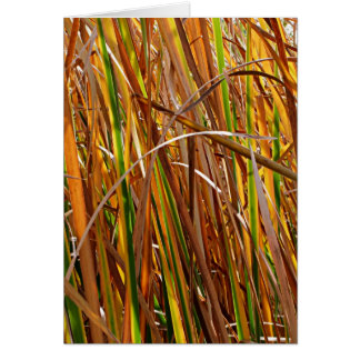 Autumn Reeds Number 5 (Vertical) Card