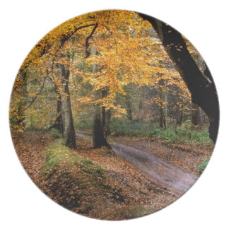 Autumn Road Less Traveled Party Plate