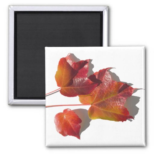 Autumn Shades Refrigerator Magnet